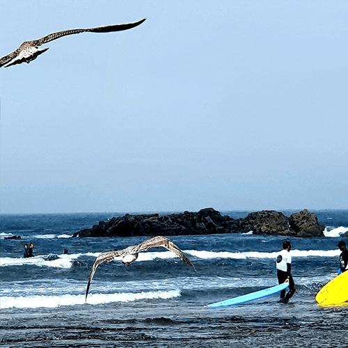 surf camp ericeira - Ericeira